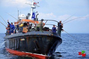 Wędkarstwo morskie - Shanon