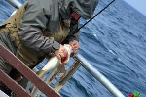 Zezwolenie na strefę Morską