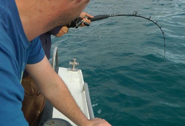 Wędkowanie w Australii -To był rekin