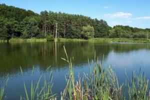Zezwolenie Jezierzyce – Stawy w Dolinie Płoni