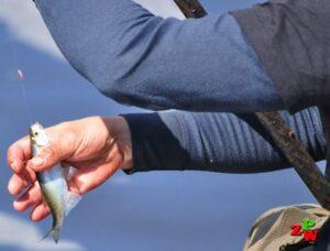 Zezwolenie na wędkowanie Gospodarstwo Rybackie w Charzykowych