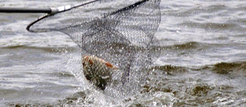 Zezwolenie na wędkowanie Jezioro Wicko